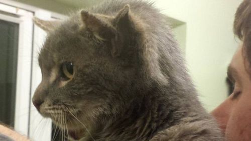 A three-eared cat from Norfolk (via BBC).