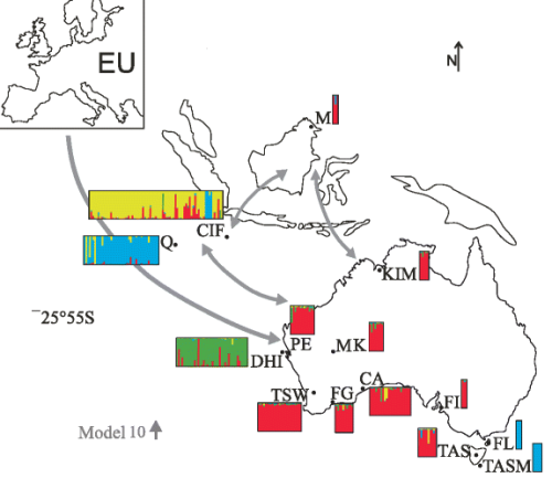 Fig. 2 Map of Australia, Southeast Asia and Europe with possible invasion routes. Possible invasion routes of cats shown on a map of Australia and Southeast Asia with Europe (EU) in the top left-hand corner. Arrows indicate invasion routes with highest support from the phylogeographic model selection approach (model 10 grey arrows; further details in Additional file 4: Figure S3). STRUCTURE plots showing ancestry (K = 4) inferred from microsatellite data for mainland Australia, Australian islands and Southeast Asia. Each individual cat is represented by a single vertical line in plots for each location. Abbreviations for populations follow Table 1