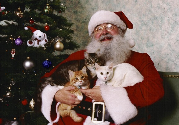SantaKitties