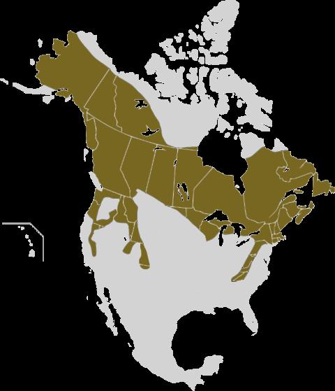 800px-Lepus_americanus_map.svg