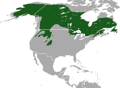 Canada_Lynx_area