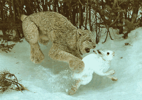 lynx_and_hare1
