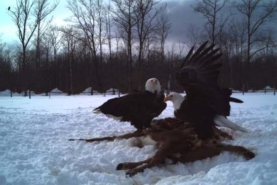 eagle10_edit