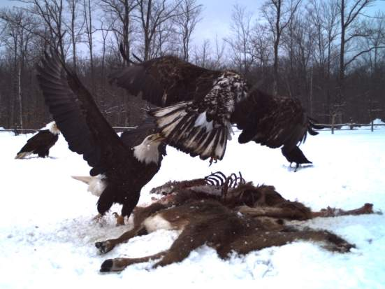 eagle7_edit