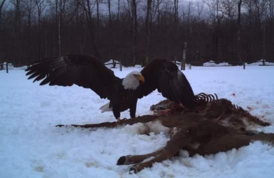 eagle9_edit