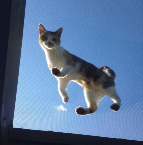 Sasha Ceiling Cat