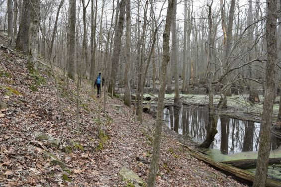 Hiking along Tupelo Trail, Little Black Slough to the right, Cache River State Natural Area, Illinois, USA, March 23, 2016