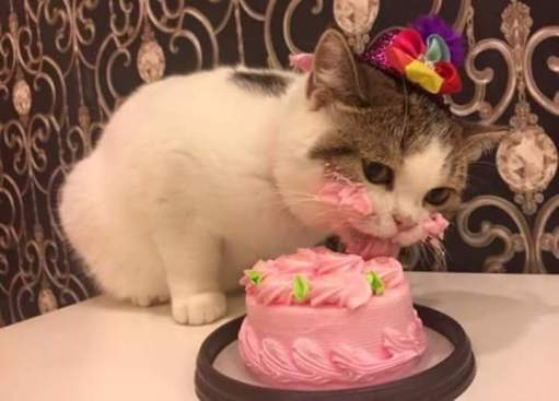 Do You Anything For Your Cat On Its Birthday