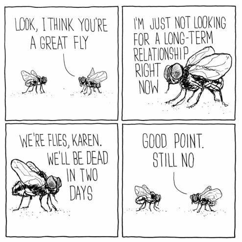 flies_n