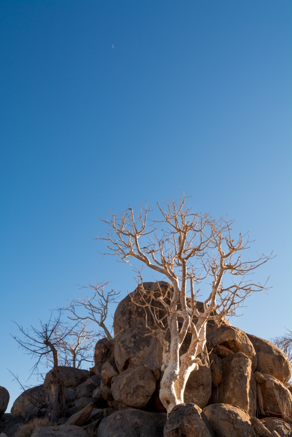 Africa - 0176