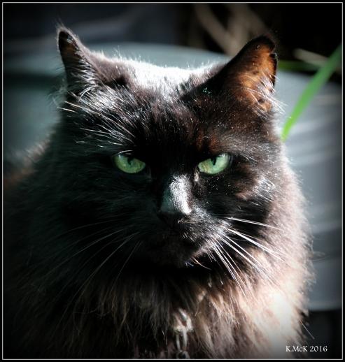 cat_6