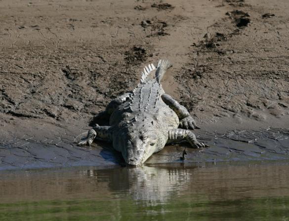 crocodile_trail