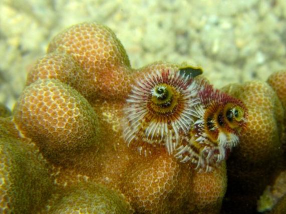 invertebrates05