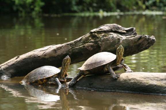 sliding_turtle_pair