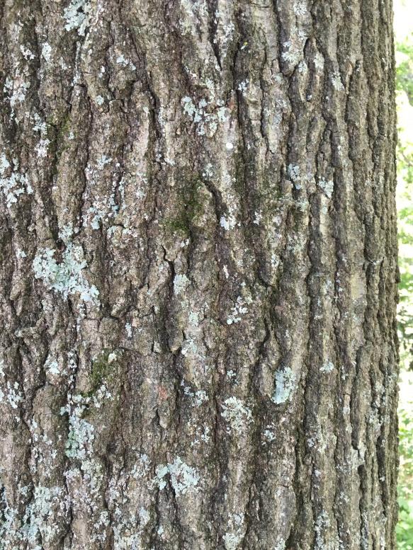 Spot the grass moth_1