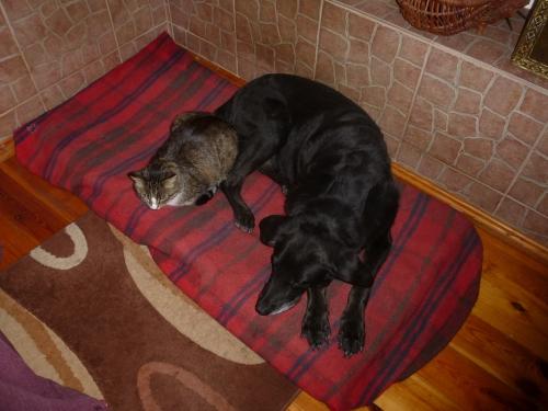 H&C sleepng