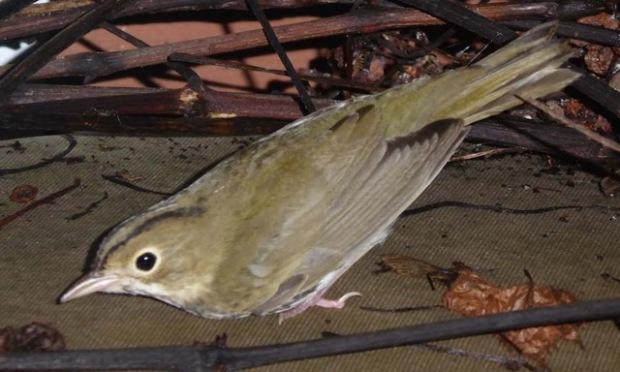 NS_bird