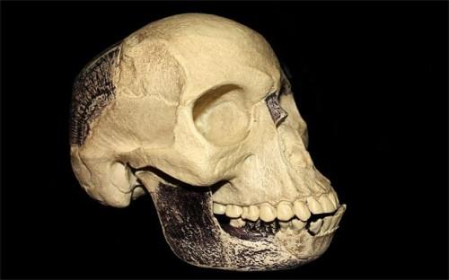piltdown-skull_2416562b