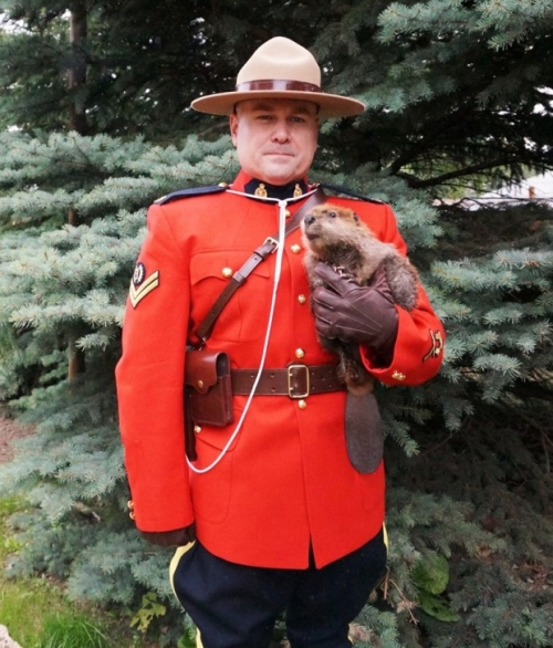 rcmp-cpl-jason-pinder-with-a-beaver-kit