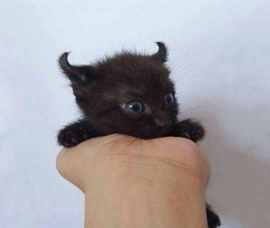 Black Cat Skin Color