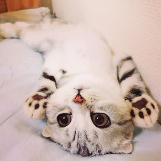 cute-kittens-29-57b30ad229af3__605