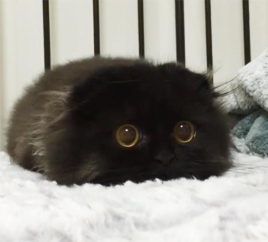 cute-kittens-64-57b32778a2fe1__605