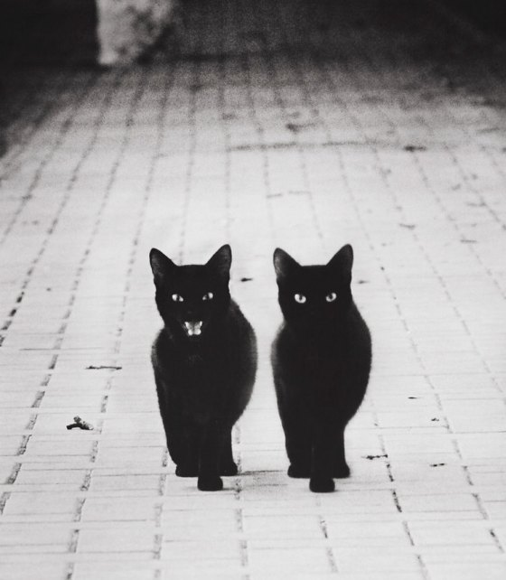 mysterious-cats-photography-2
