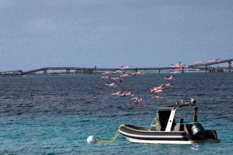 016-img_3276-flamingos-flying-over-ocean-behind-house