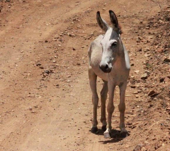 214-img_3330-donkey-in-washington-slagbaai-park