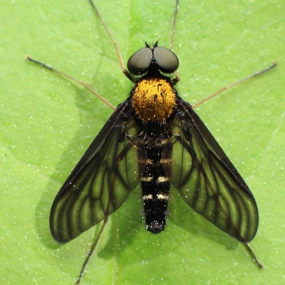2snipefly