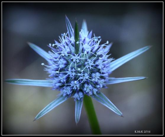 flower_87
