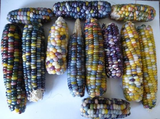 Nicole gem corn