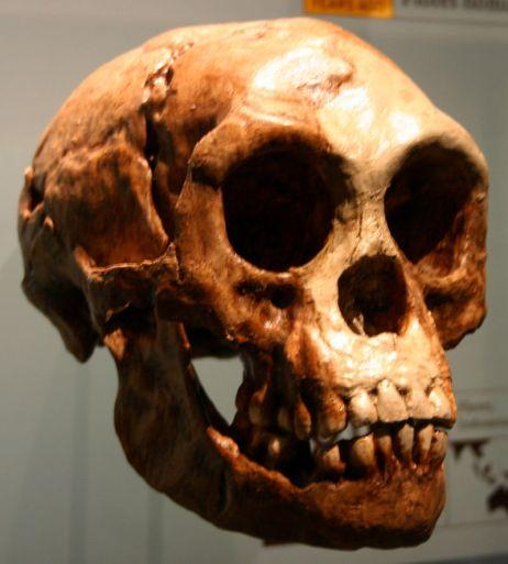 800px-homo_floresiensis