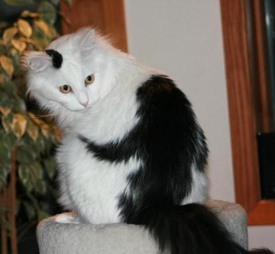 cat-fur-markings-20