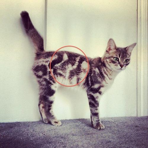 cat-fur-markings-22