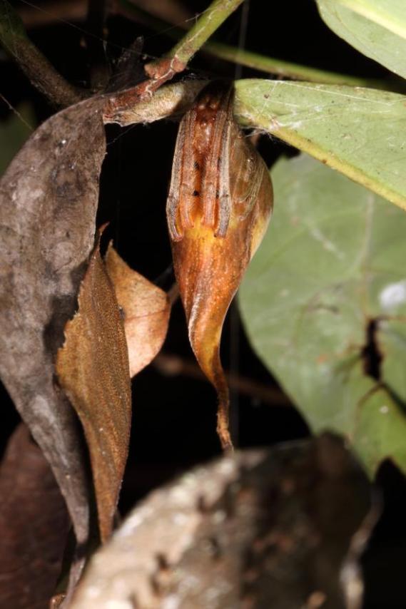 leaf-spider-01-adapt-590-1