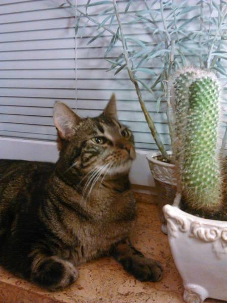 leon-cactus