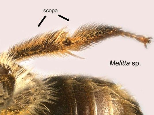 melitta_scopa