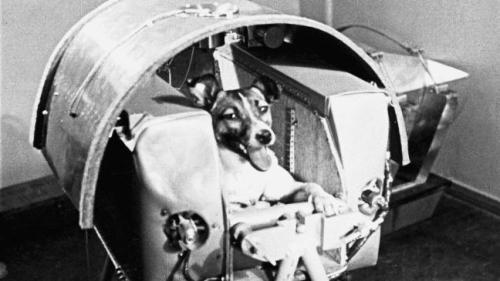 on-this-day-laika-the-dog-makes-space-history-136401421443103901-151103001005