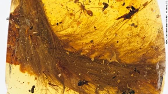 161208121636-dinosaur-amber-2-exlarge-169