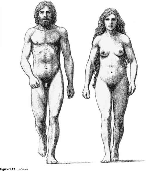 Sexual dimorphism in human evolution