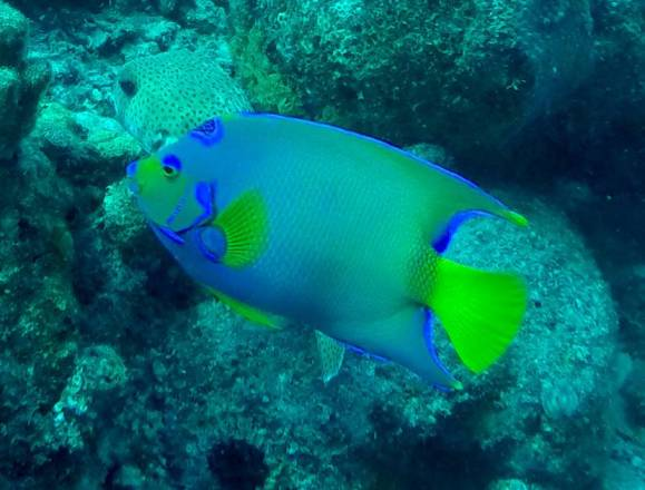 517-gopr0143-fish