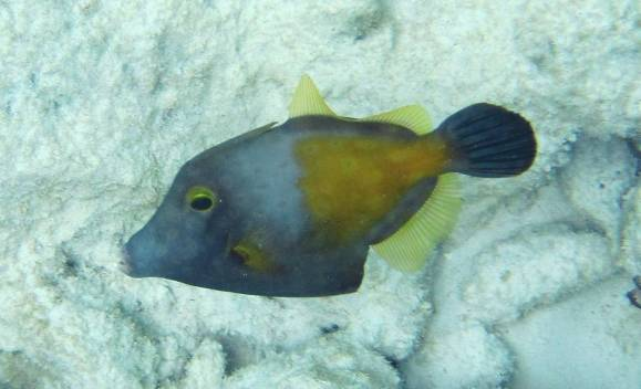 524-img_8255-fish