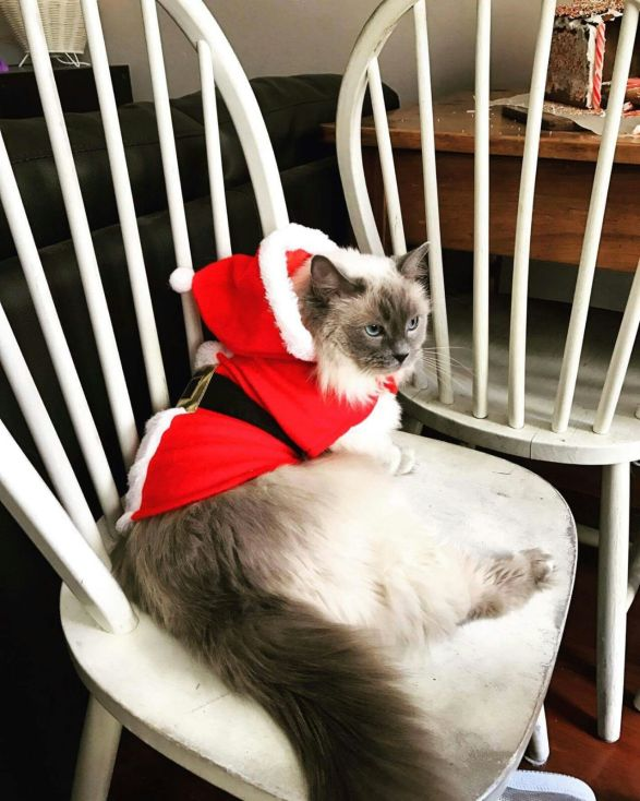 christmascat-marple