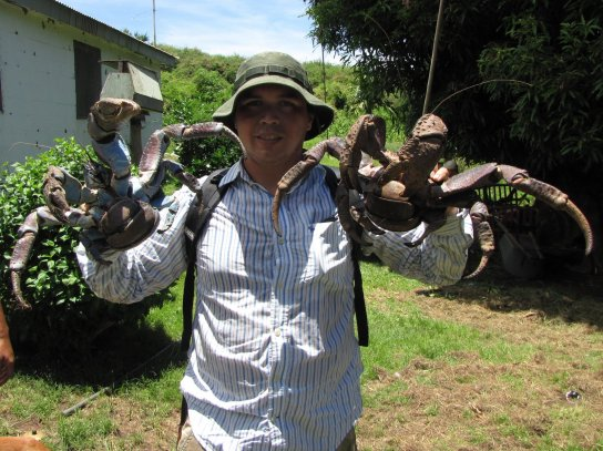 The mighty pinch of the coconut crab « Why Evolution Is True