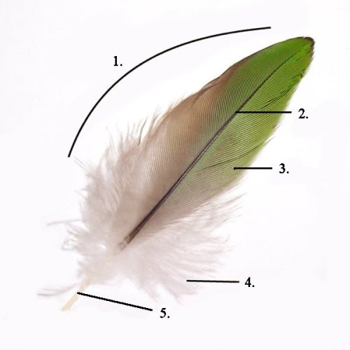 parts_of_feather_modified