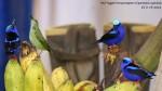 dsc03846-the-banana-thieves-share