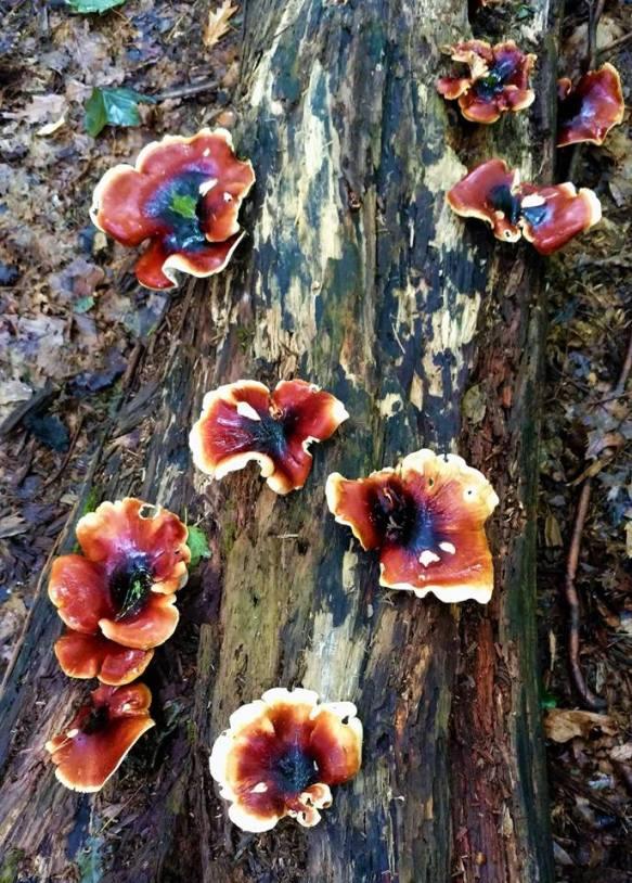 flower-fungus