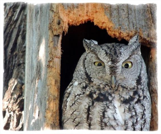 owl1015