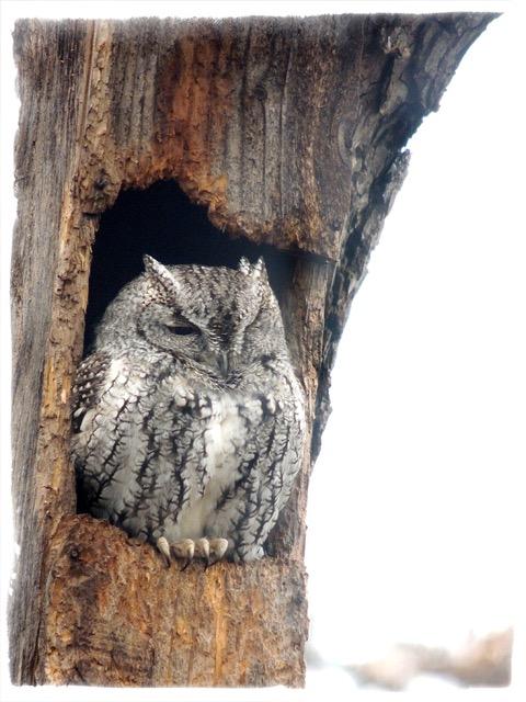 owl1216